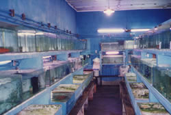 Netuno Aquarium na Avenida Washington Luis em 1997